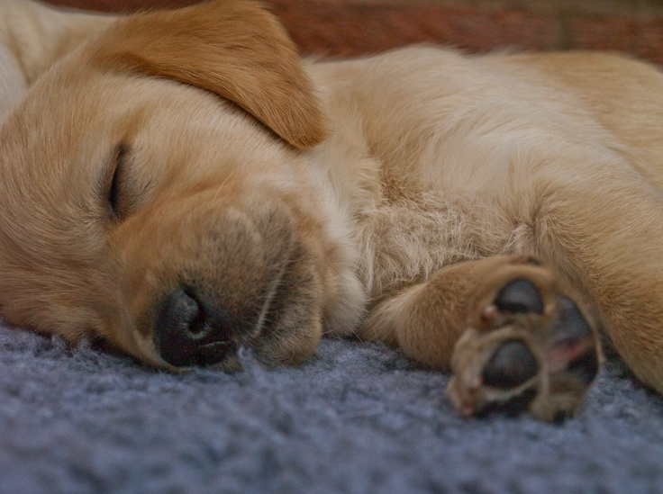 freedom guide dogs for the blind