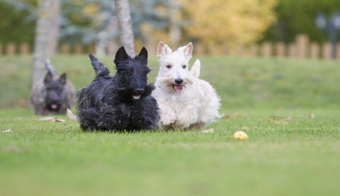 natural instinct dog food feeding guide